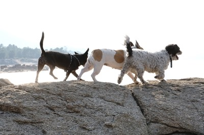 Vegan vegetarisch hypoallergen gesund Hundesnacks Kausnacks Knochen hier online kaufen! Gut für den eigenen Hund, gut gegen das Tierleid, gut für das Klima.