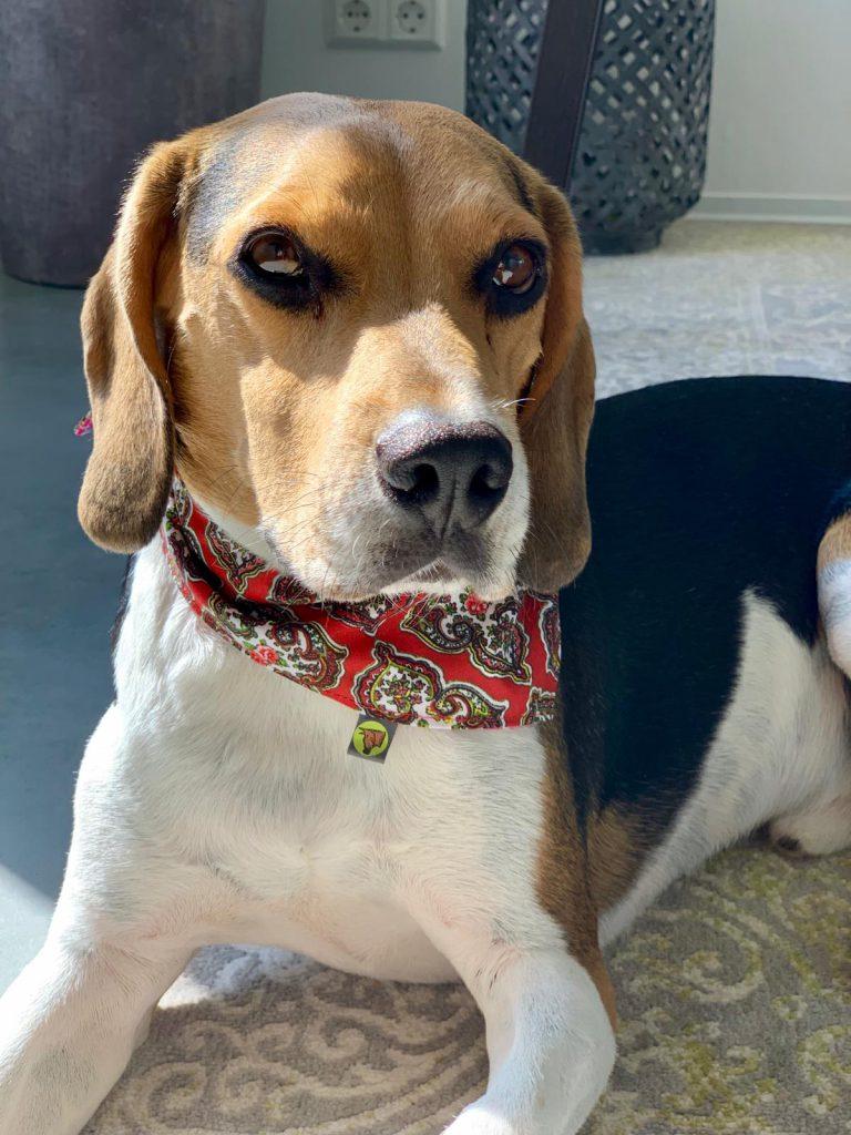 Weihnachtsgeschenk besondere Hundehalstücher Bandanas für Hunde von hundsfutter