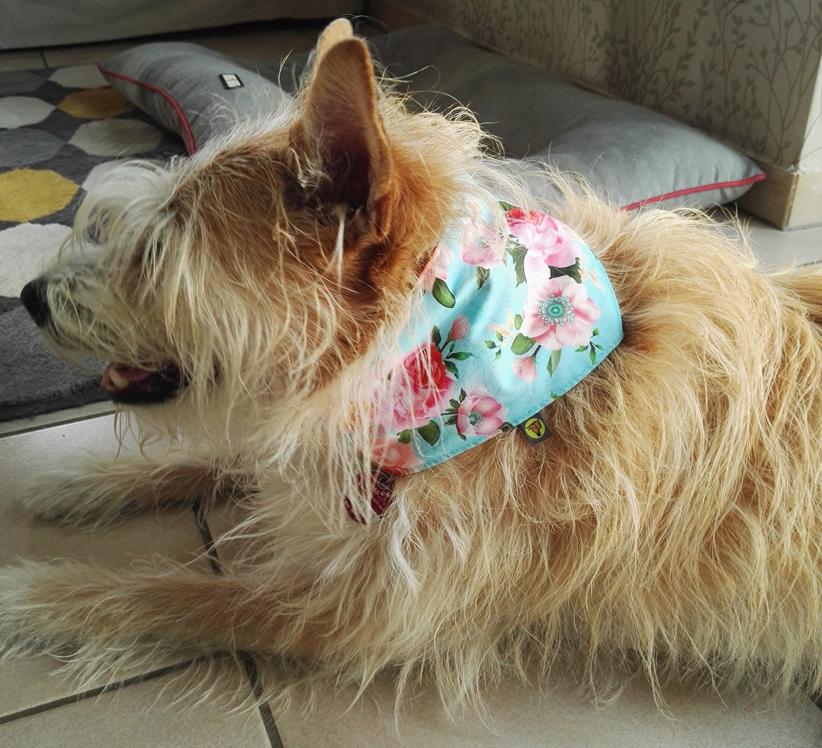 Hundehalstuch jetzt fair online kaufen - individuell - beidseitig zu tragen - Massanfertigung möglich - fair in Deutschland hergestellt - schöne Soffdesigns - limitierte Auflage - keine Massenware