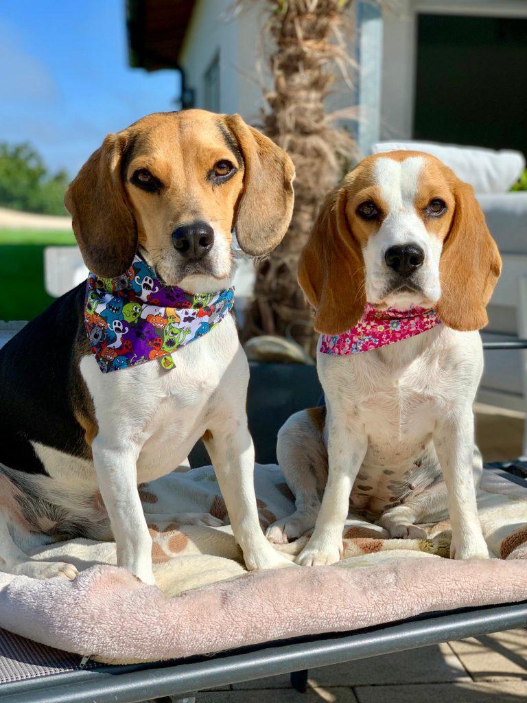 Bandanas Hundehalstuch Hundeaccessoir Hundehalstücher