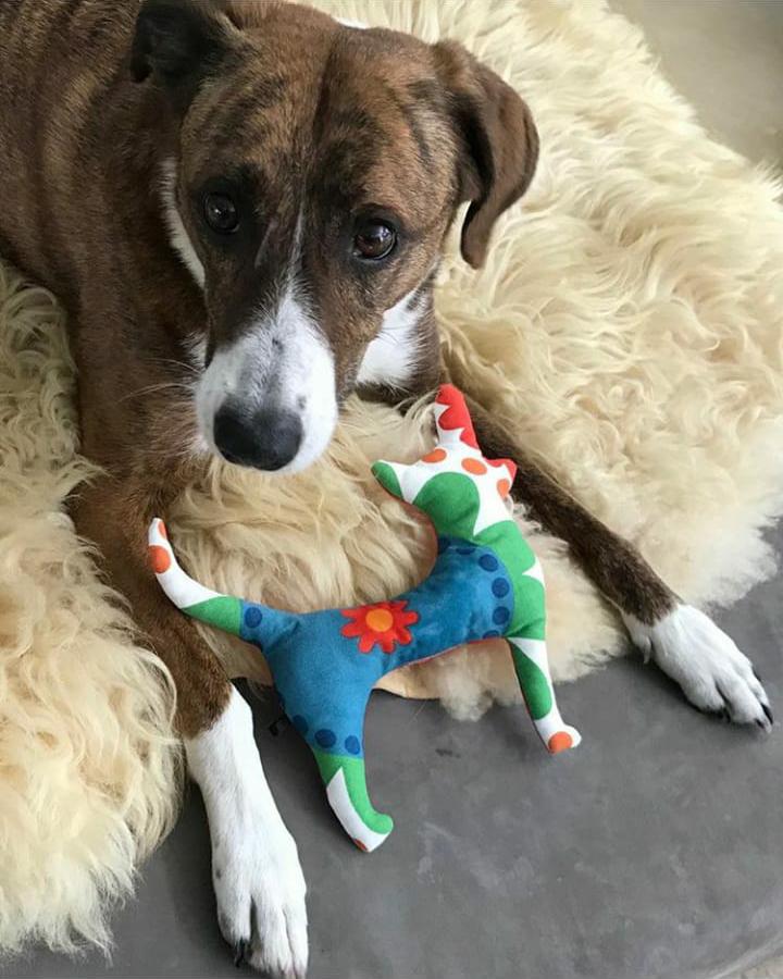 Unsere Hundespielzeuge sind einzigartig.