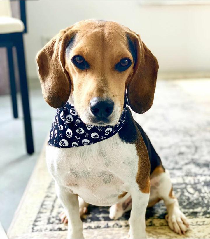 Halstücher für Hunde kaufen