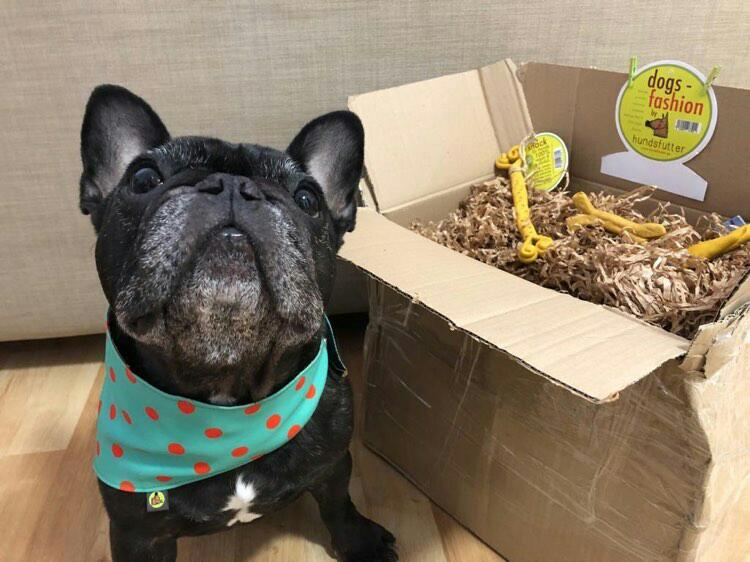 vegane vegetarische Hundesnacks und Halstücher in Geschenkbox