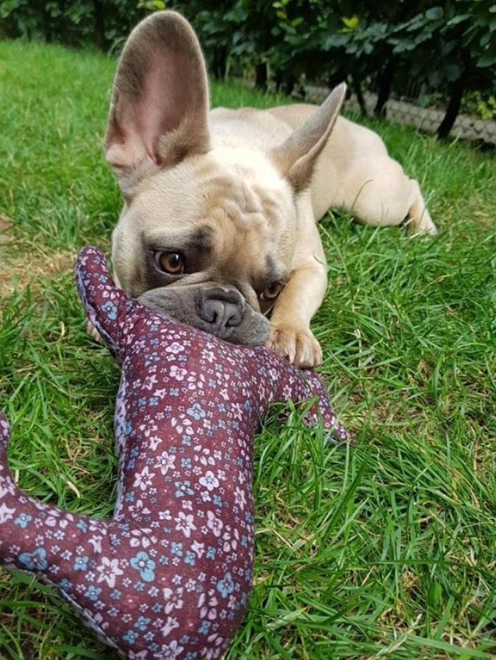 Fair hergestellte Hundespielsachen