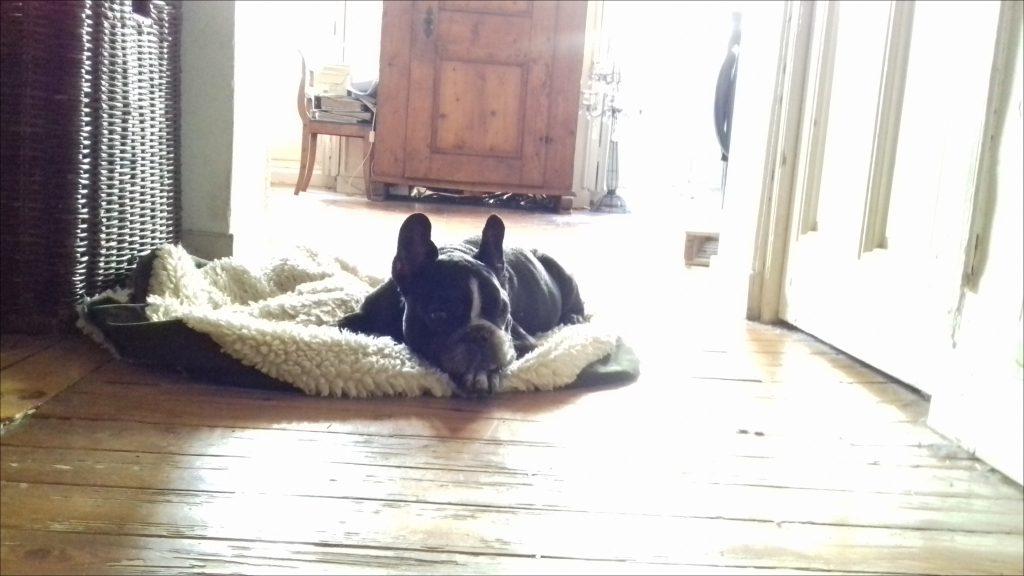 Gesundes frisch gekochtes Hundsfutter frei Haus im hundefutterabo vom Tierarzt