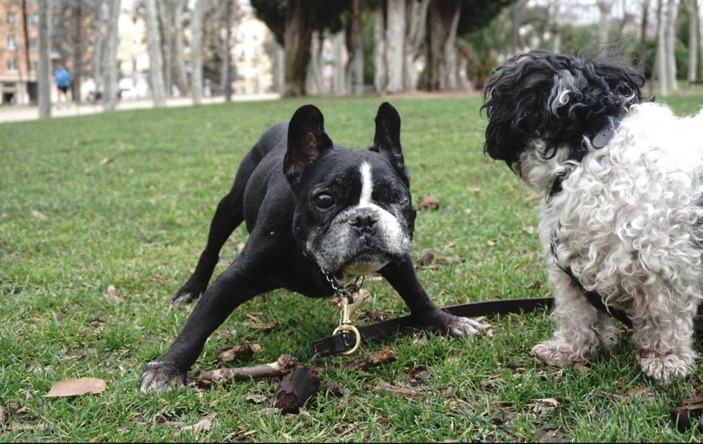 Darum machen wir frischgekochtes Hundefutter im Futterabo wie alles bei hundsfutter: nachhaltig, solidarisch, fair, das Tierwohl respektierend, menschlich, regional und einfach gut..