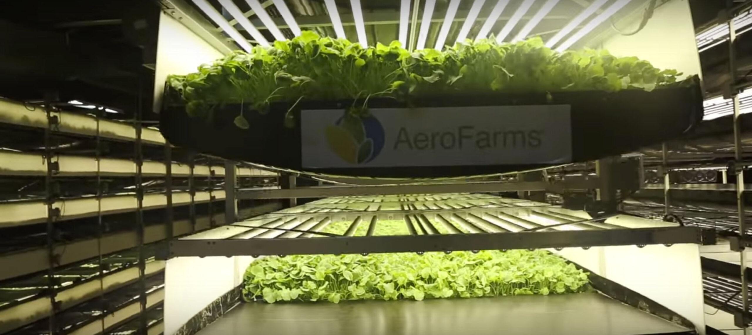 nachhaltige Landwirtschaft im Stadtzentrum ist heute schon möglich