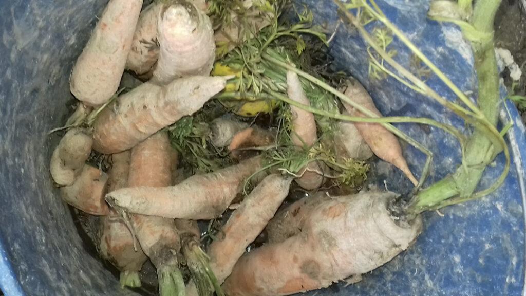 Regionale ausgesuchte Zutaten für die nachhaltigen gesunden Produkte von hundsfutter