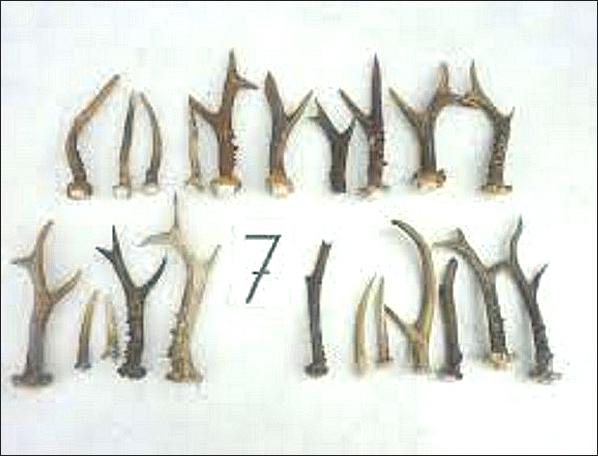 Hirschgeweihe für Hunde findet man nicht im Wald. Die Hirsche werden wie andere Nutztiere gezüchtet um sie zu Töten und ihre Körper zu Geld zu machen.